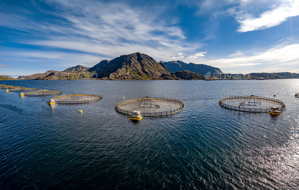 Farm salmon fishing in Norway - Stock Photo - Images