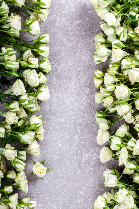White Roses Flowers .Gift for a romantic holiday Valentine Day . - Stock Photo - Images