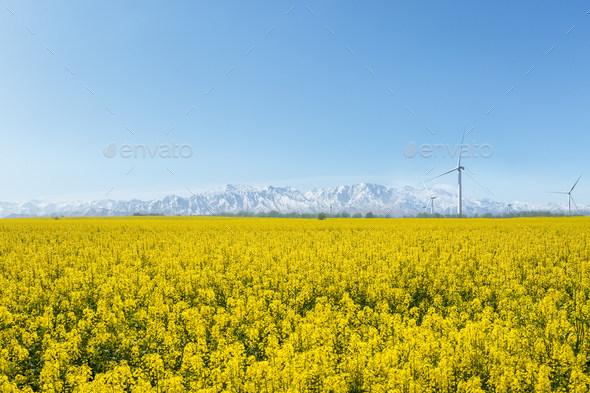 spring landscape in qinghai - Stock Photo - Images