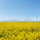spring landscape in qinghai - PhotoDune Item for Sale