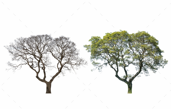 same tree in a different season - Stock Photo - Images