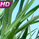 Spring Grass - VideoHive Item for Sale
