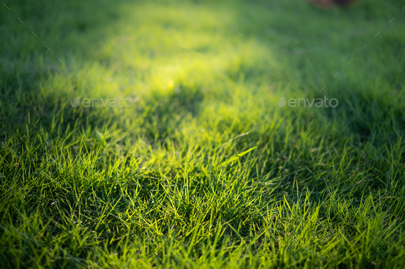 the grass - Stock Photo - Images