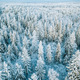Aerial top view of snow covered winter  forest trees in Finland. - PhotoDune Item for Sale