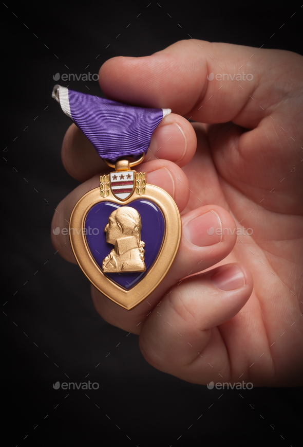 Male Hand Holding the Armed Forces Purple Heart Metal - Stock Photo - Images