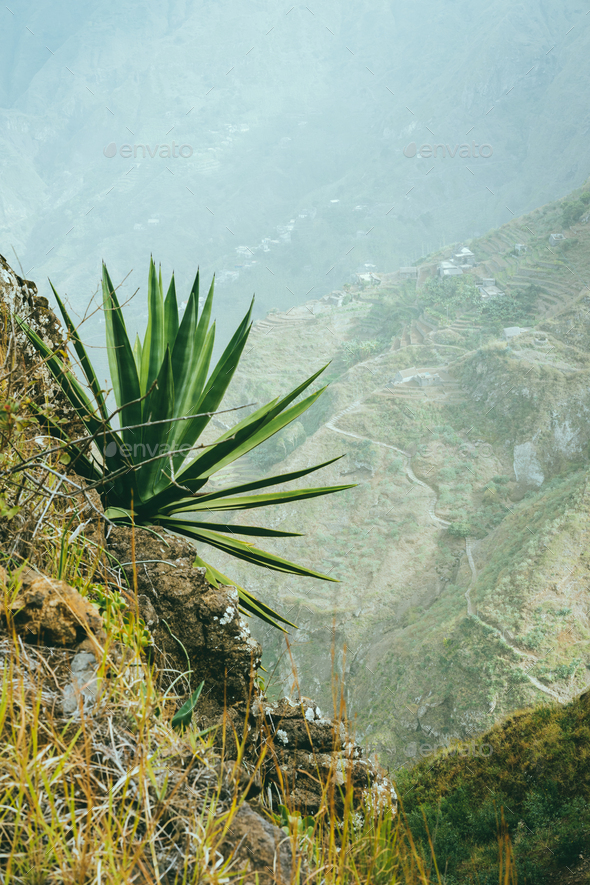 Agave on the mountain slope. Santo Antao Island, Cape Verde Cabo Verde - Stock Photo - Images