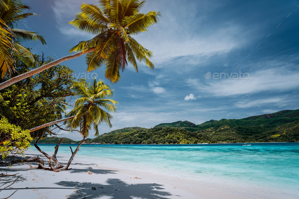 Luxury vacation on tropical island. Paradise beach with white sand and palm trees. Long distance - Stock Photo - Images