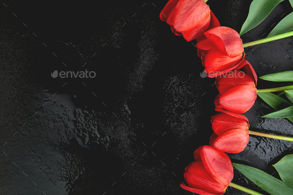 Fresh red tulips on black background. A bouquet of spring flowers, Beautiful greeting card. - Stock Photo - Images