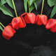 Fresh red tulips on black background. A bouquet of spring flowers, Beautiful greeting card. - PhotoDune Item for Sale