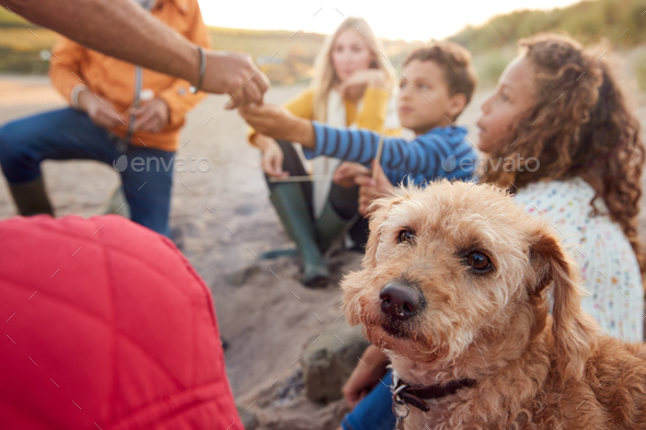 Pet Dog With Multi-Generation Family Toasting Marshmallows Around Fire On Winter Beach Vacation - Stock Photo - Images
