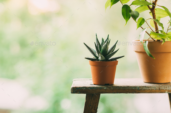 Home plants in pots outdoors - Stock Photo - Images