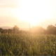 Sunset On The Field 1 - VideoHive Item for Sale