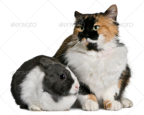 Cat and rabbit sitting in front of white background - Stock Photo - Images