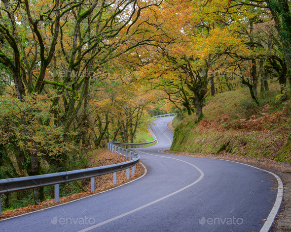 Autumn Forest crossed by an Empty Road - Stock Photo - Images