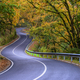 Curvy Road crosses a Lush Autumn Forest - PhotoDune Item for Sale