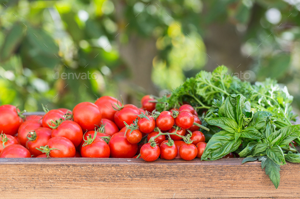 Cherry tomatoes in old wooden tray. - Stock Photo - Images
