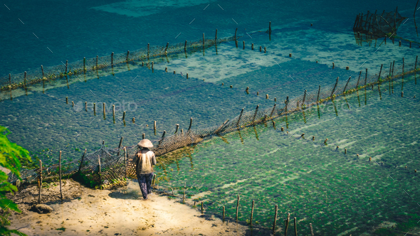 People collect seaweed plantations algal - Nusa Penida, Bali, Indonesia - Stock Photo - Images