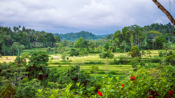 Rice tarraces in Sidemen, Rainy clouds are moving down, Bali, Indonesia - Stock Photo - Images