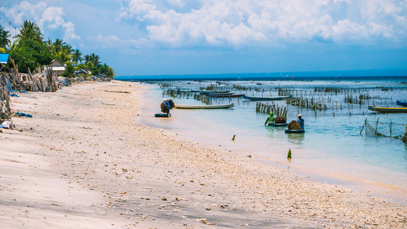 Seaweed plantation farm by Low Tide in Nusa Penida, Bali in Clouds on Background, Indonesia - Stock Photo - Images