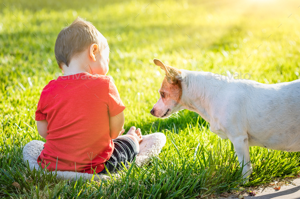 Cute Baby Boy Sitting In Grass Playing With Dog - Stock Photo - Images