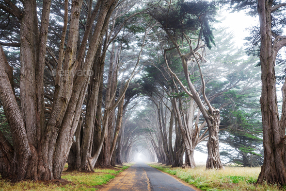 Trees alley - Stock Photo - Images