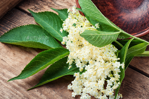 Champagne from elderberry flowers - Stock Photo - Images