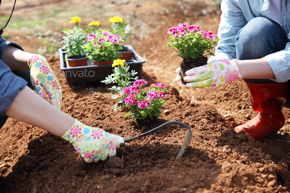 Ecology concept photo, gardening in a vegetable garden in spring - Stock Photo - Images