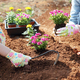 Ecology concept photo, gardening in a vegetable garden in spring - PhotoDune Item for Sale