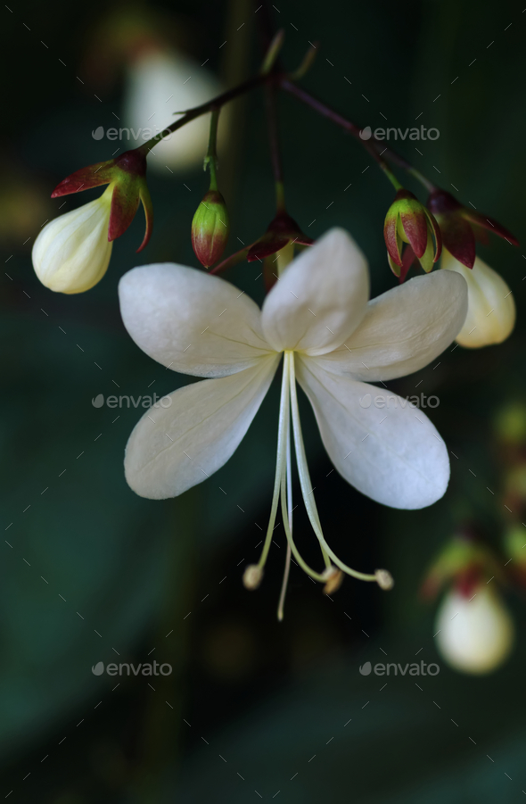 Close-up view of the white flower with tiny long pollen - Stock Photo - Images