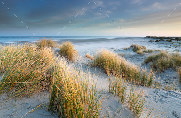 sand dunes on windy North sea beach - Stock Photo - Images
