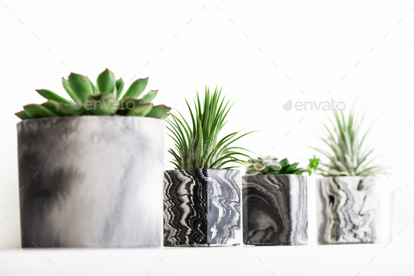Marbled geometric succulent planters with beautiful tiny plants - Stock Photo - Images