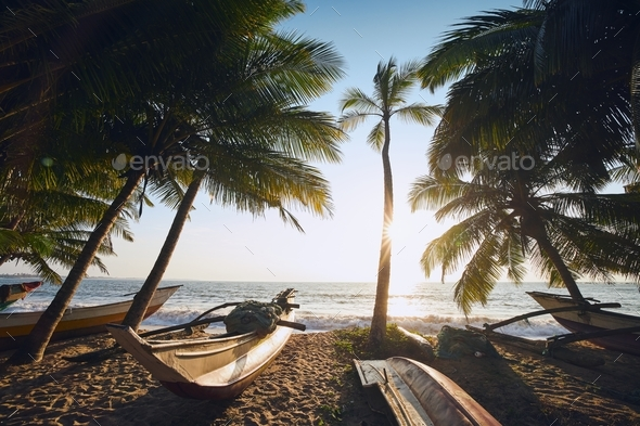 Fishing boats under palm trees - Stock Photo - Images