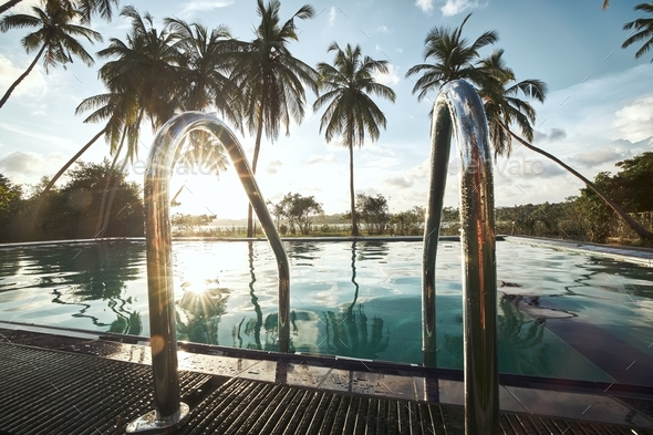 Swimming pool in the middle of coconut palm trees - Stock Photo - Images