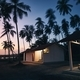 Bungalows under coconut palm trees - PhotoDune Item for Sale