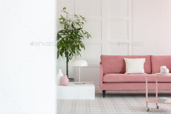 Big green plant in pot next to pastel pink sofa in white elegant interior - Stock Photo - Images