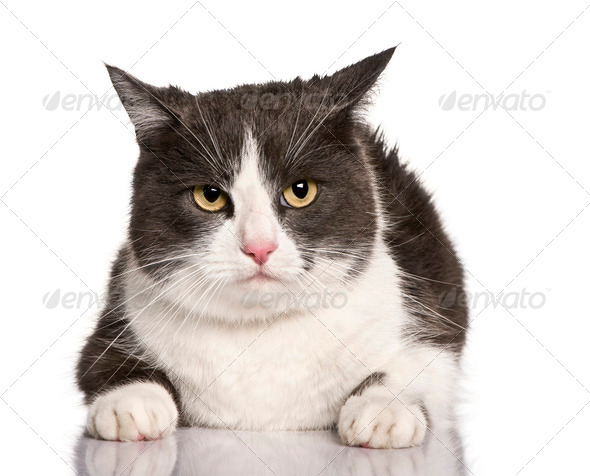 Crossbreed cat, 4 years old, sitting in front of white background - Stock Photo - Images