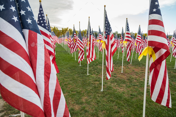Field of Veterans Day American Flags Waving in the Breeze. - Stock Photo - Images