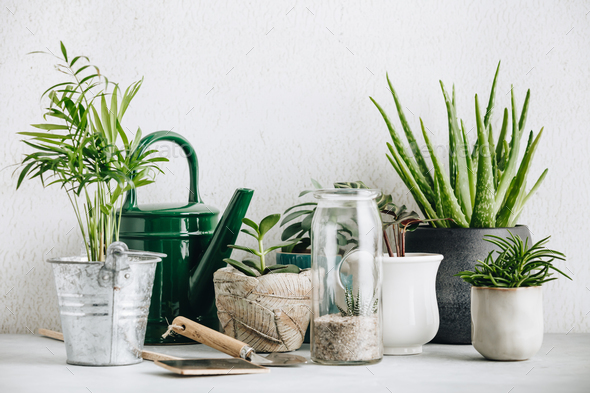 Collection of various cactus and succulent plants in different pots - Stock Photo - Images