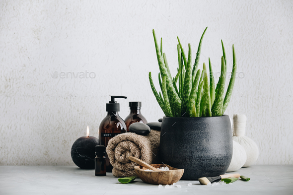Natural Spa concept with aloe vera, space for text and logo - Stock Photo - Images