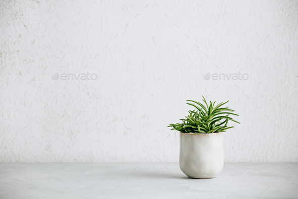 Close up of tiny succulent in trendy ceramic pot against white wall - Stock Photo - Images