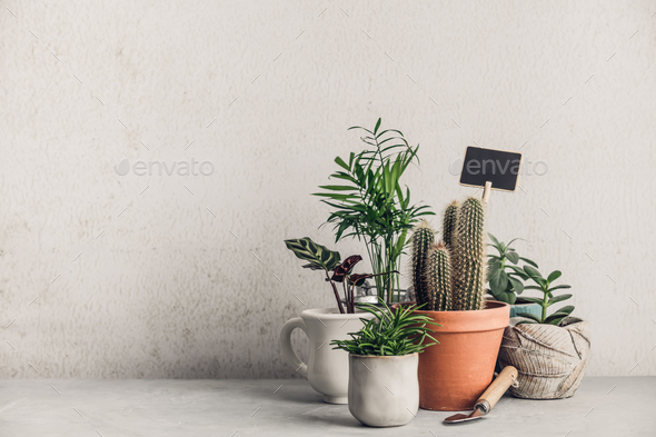 Collection of various cactus and succulent plants - Stock Photo - Images