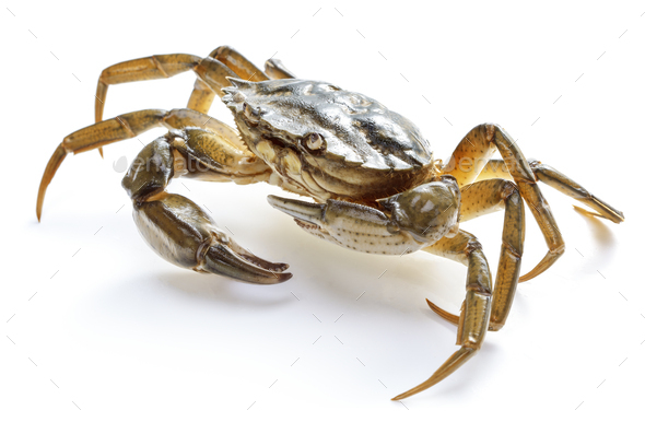 crab isolated on white - Stock Photo - Images