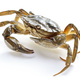 crab isolated on white - PhotoDune Item for Sale
