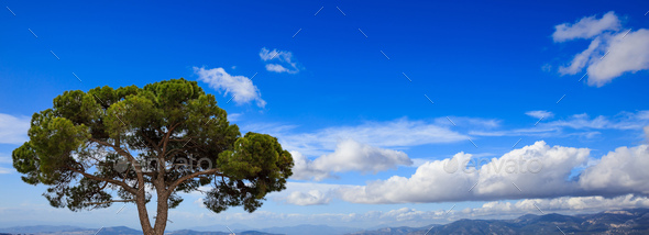 Pine tree by the sea, blue sky background, Greece, Attica. - Stock Photo - Images