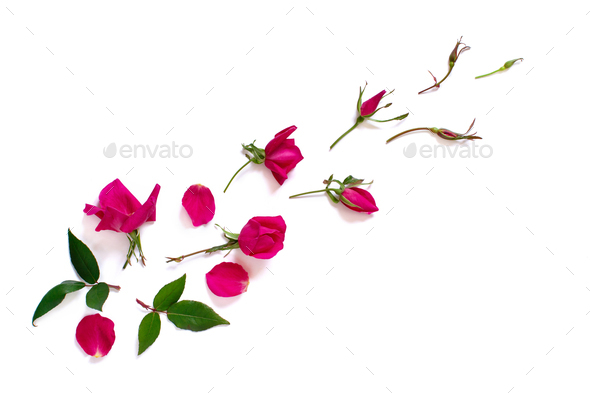 Spring composition with pink roses over white background - Stock Photo - Images