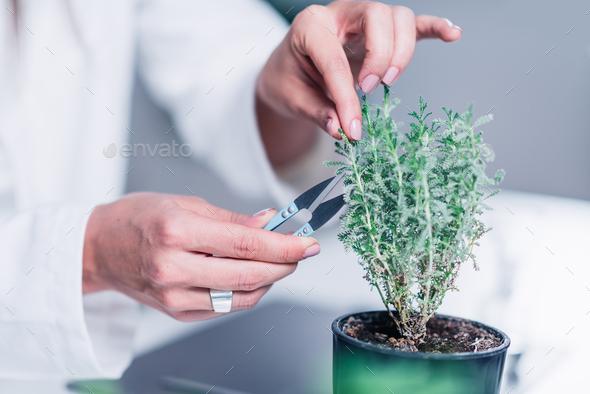 Homeopathy. Homeopath preparing herbal remedies - Stock Photo - Images