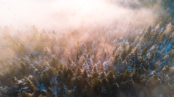 Moody Image of Winter Forest at Sunrise with Fog and Sunlight Beams - Stock Photo - Images