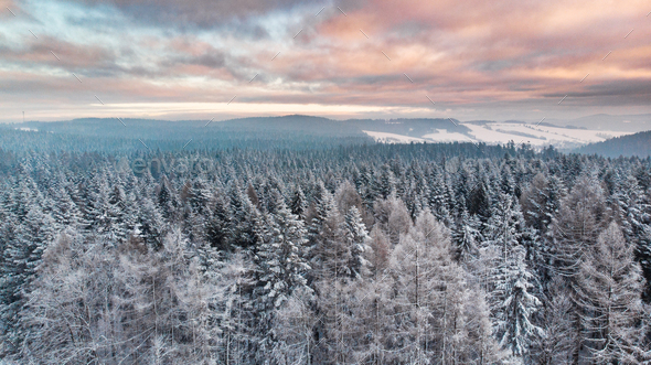 Sunrise Over Snowy Pine Trees. Beautiful Sky and Clouds. Aerial Drone View - Stock Photo - Images