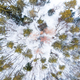 Spruce Trees in Winter Forest, Aerial Drone Top Down View - PhotoDune Item for Sale