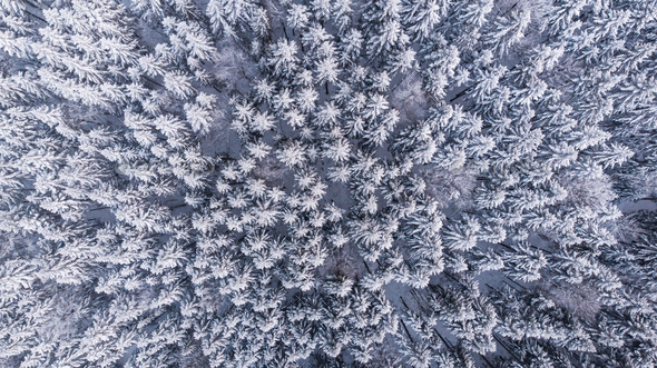 Winter Woderland Snowy Pine Trees in Wild Woodland. Aerial Top Down View - Stock Photo - Images